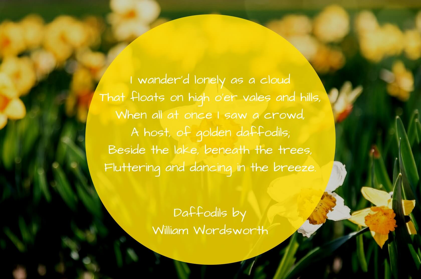Daffodils-by-William-Wordsworth